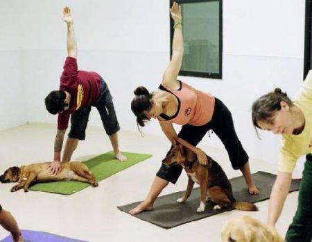 Как попадают в йогу и почему там остаются