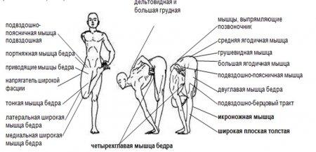 Ардха баддха падмоттанасана (наклон с полулотосом стоя на одной ноге)